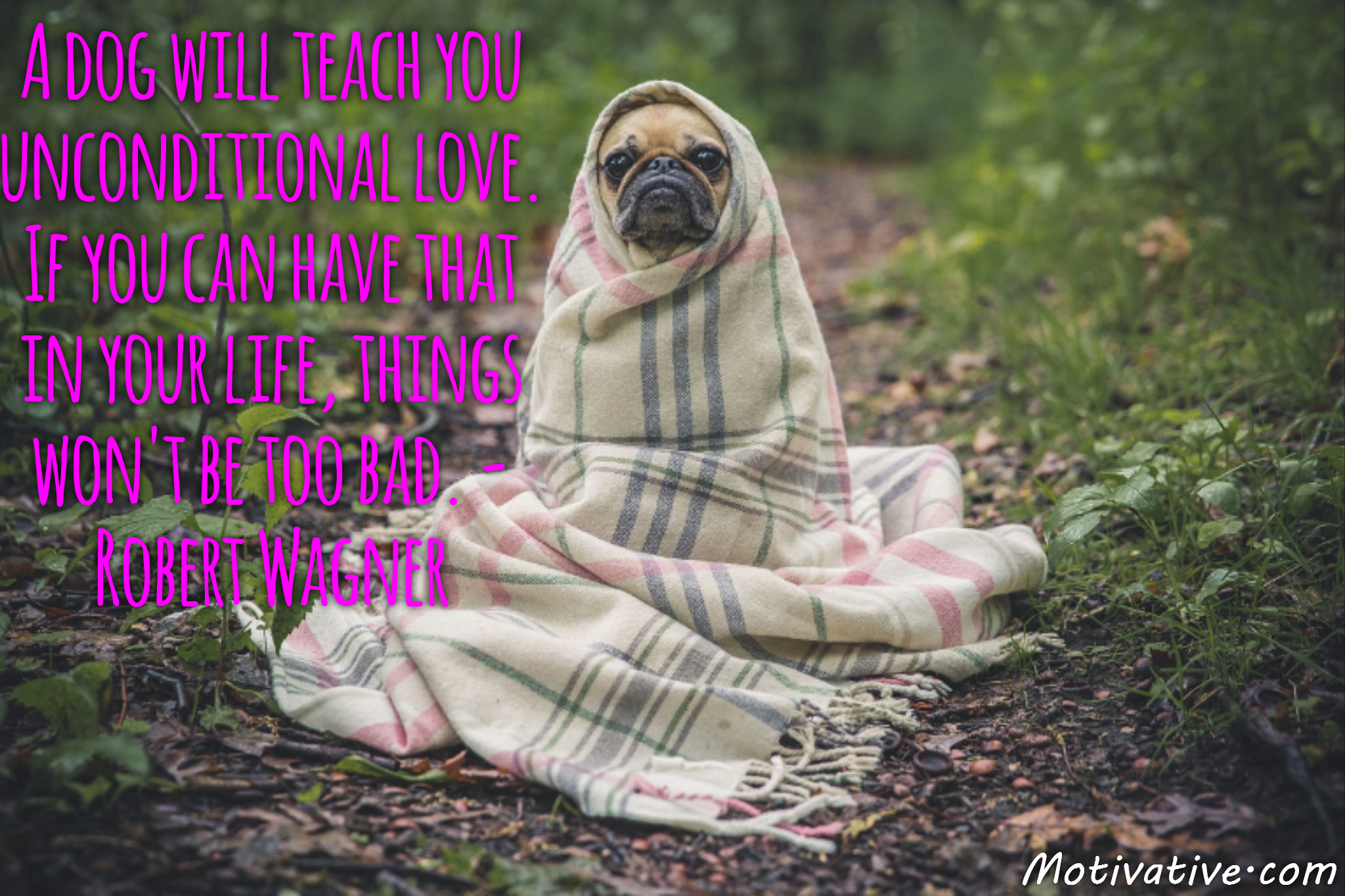 A dog will teach you unconditional love. If you can have that in your life, things won't be too bad. – Robert Wagner