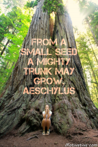 From a small seed a mighty trunk may grow. Aeschylus