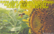 Hope is the only bee that makes honey without flowers. – Robert Green Ingersoll