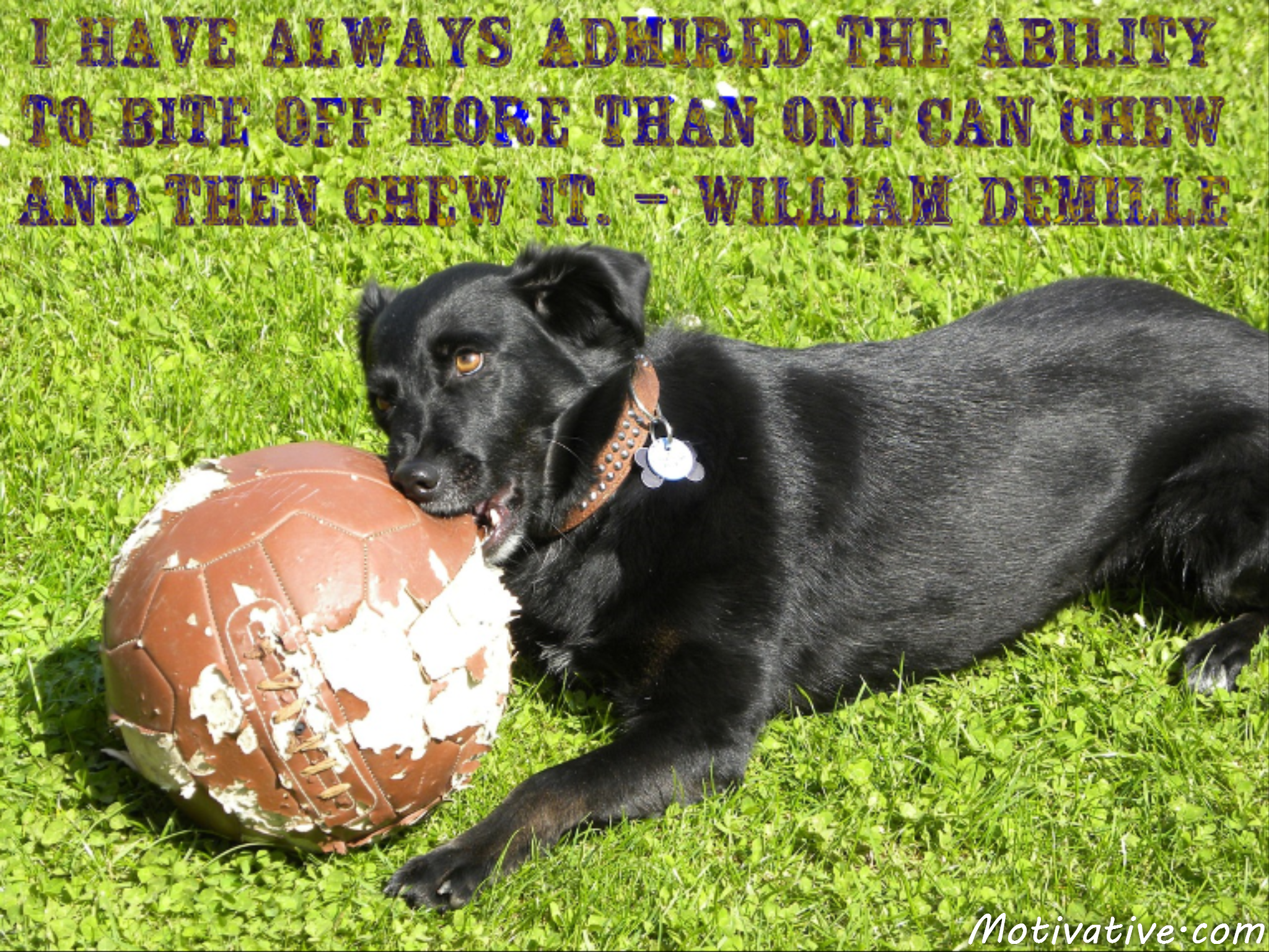 I have always admired the ability to bite off more than one can chew and then chew it. – William DeMille