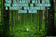 The clearest way into the Universe is through a forest wilderness. – John Muir