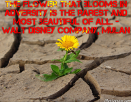 The flower that blooms in adversity is the rarest and most beautiful of all. – Walt Disney Company, Mulan