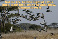Not the cry, but the flight of a wild duck, leads the flock to fly and follow. – Chinese Proverb
