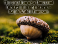 The creation of a thousand forests is in one acorn. – Ralph Waldo Emerson