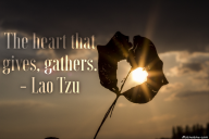 The heart that gives, gathers. – Lao Tzu