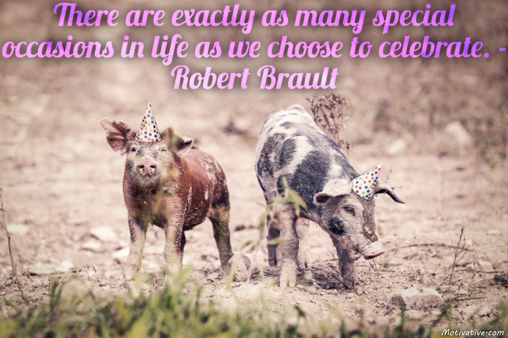 There are exactly as many special occasions in life as we choose to celebrate. – Robert Brault