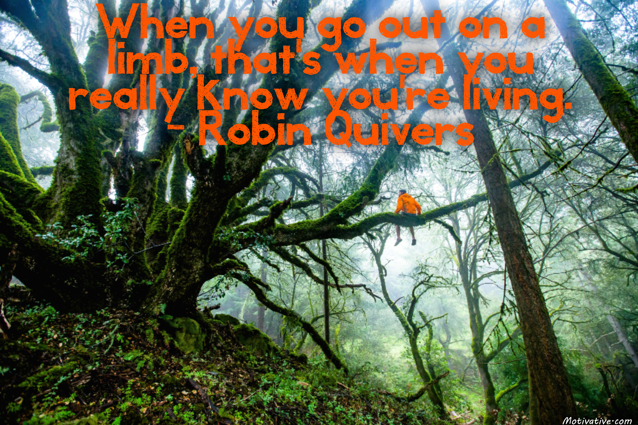 When you go out on a limb, that's when you really know you're living. – Robin Quivers