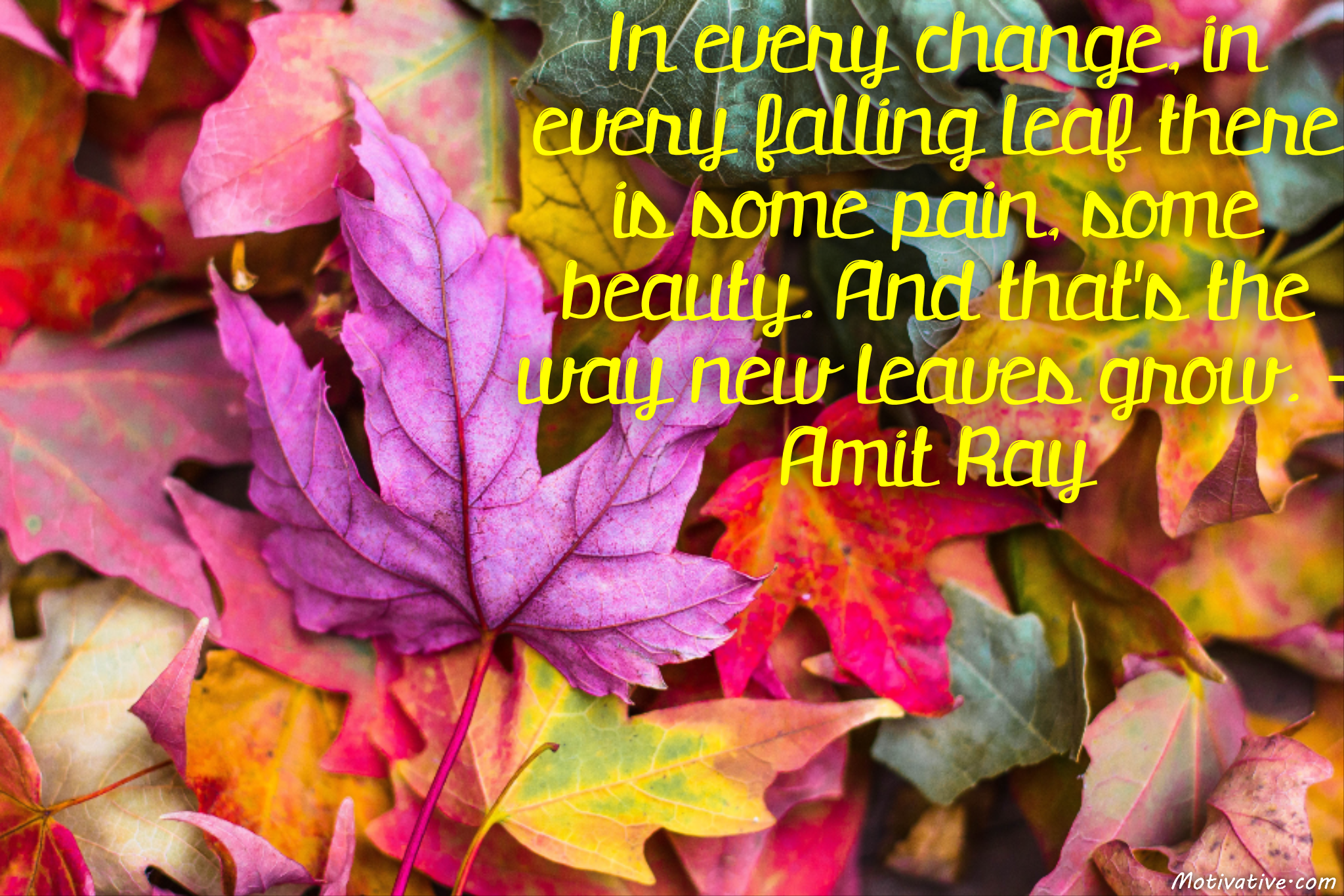 In every change, in every falling leaf there is some pain, some beauty. And that's the way new leaves grow. – Amit Ray